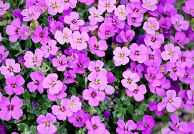 Uw landelijke tuin laten bloeien door goed tuinonderhoud